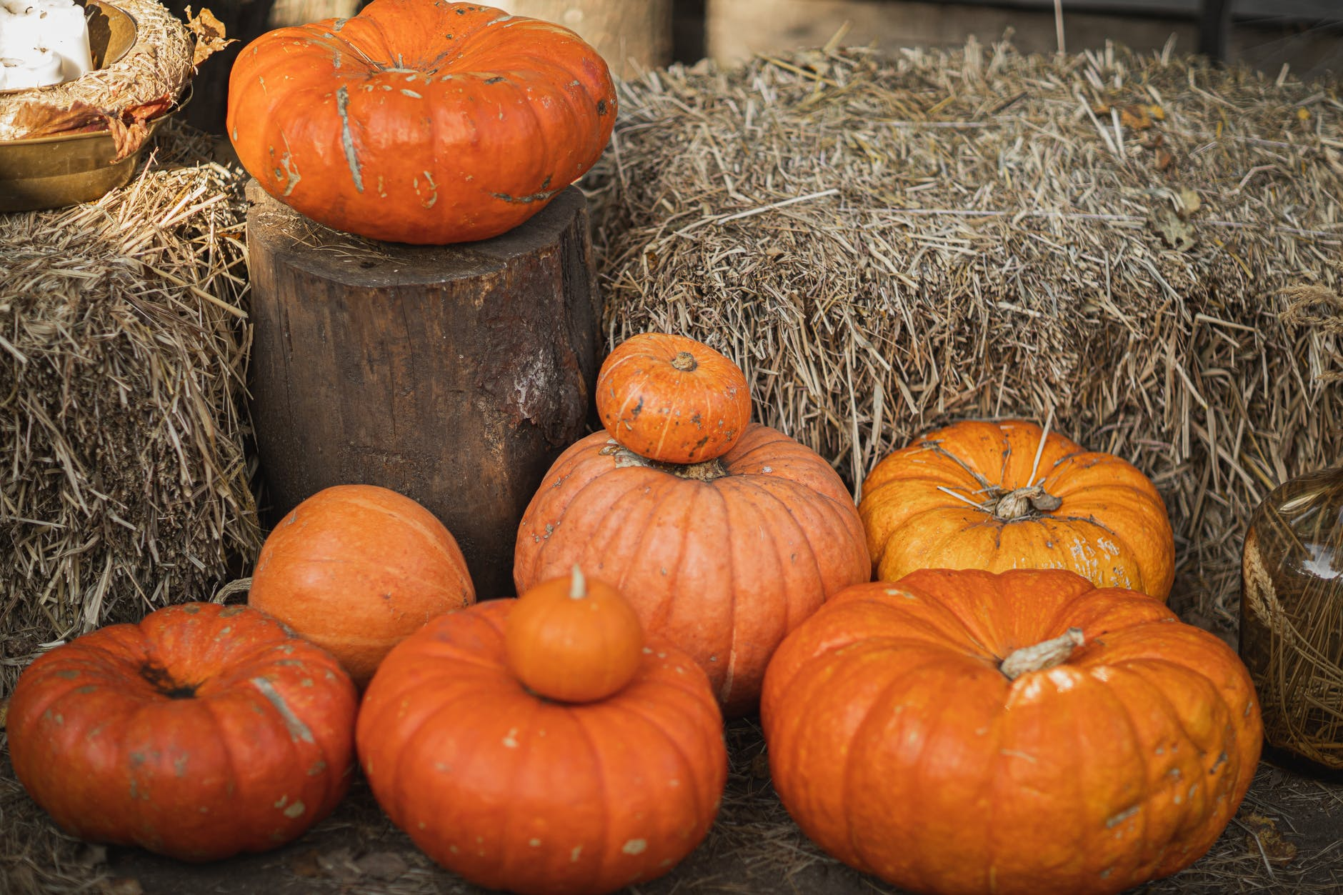 orange pumpkins on brown hay